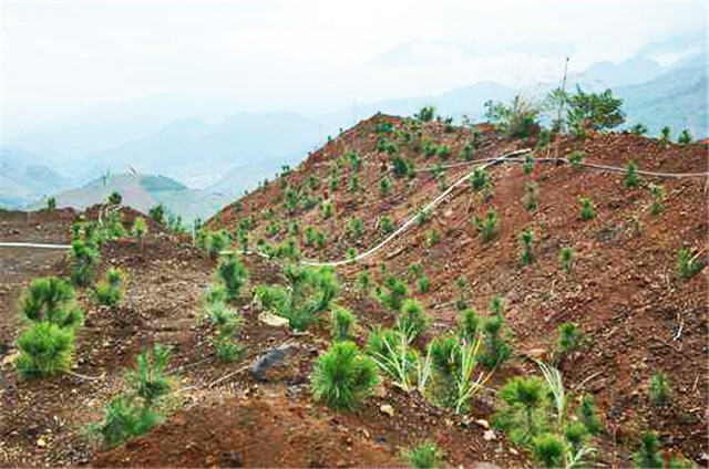 四川重金属土壤修复中土壤重金属原位钝化修复技术