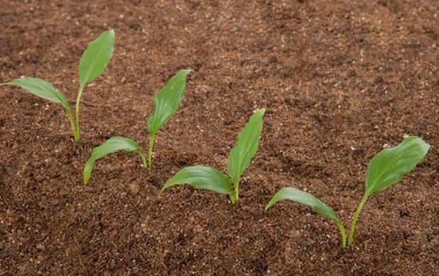四川土壤修复剂