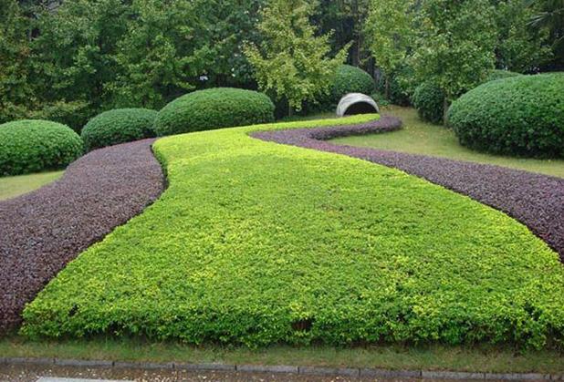 成都园林绿化工程公司教你如何防控苗木虫害问题