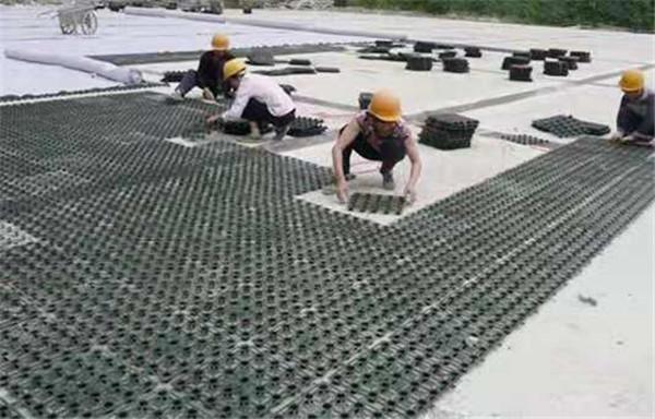 排水板价格