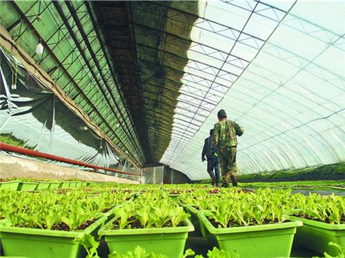 河南蔬菜大棚建设
