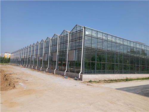 河南温室大棚_案例玻璃温室