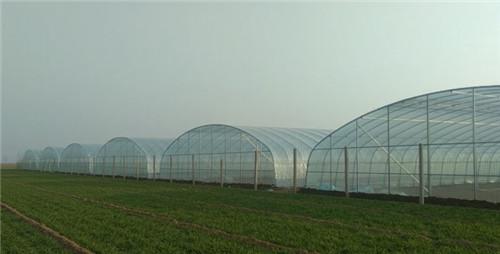 河南蔬菜大棚建设完成