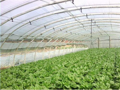 如何在大棚里播种蔬菜育苗,有什么技术方法!