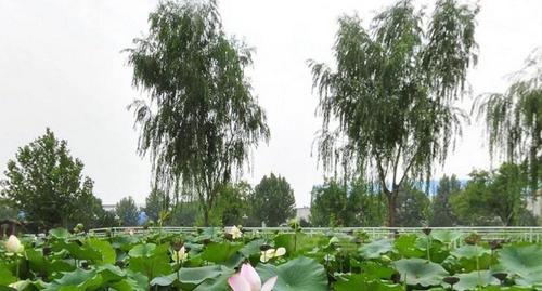 大家都去过公园,但是温室里的公园是不是让人耳目一新