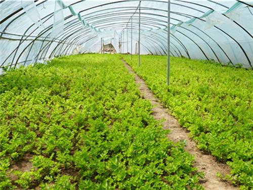河南温室大棚教你如何维护灌溉系统