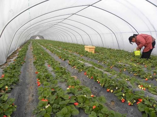 在建设蔬菜大棚的时候都需要哪些设施和材料呢?