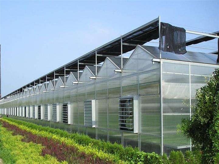 用温室大棚来种植玫瑰的好处是什么?