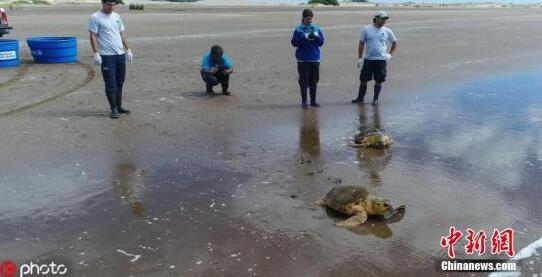 一场正在发展的灾难!报告:塑料正扼杀海洋生命