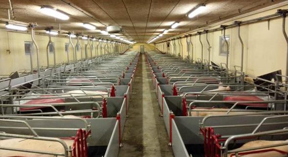 四川养猪设备—产床