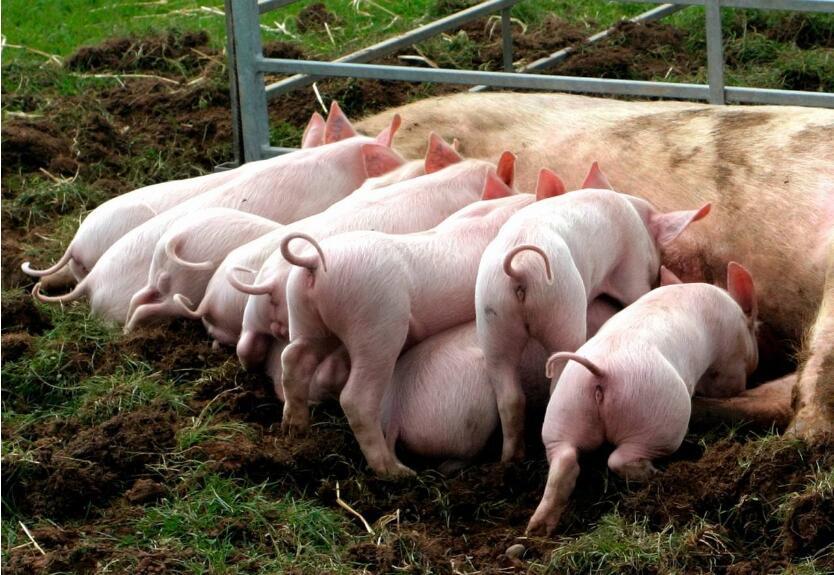 四川养猪设备