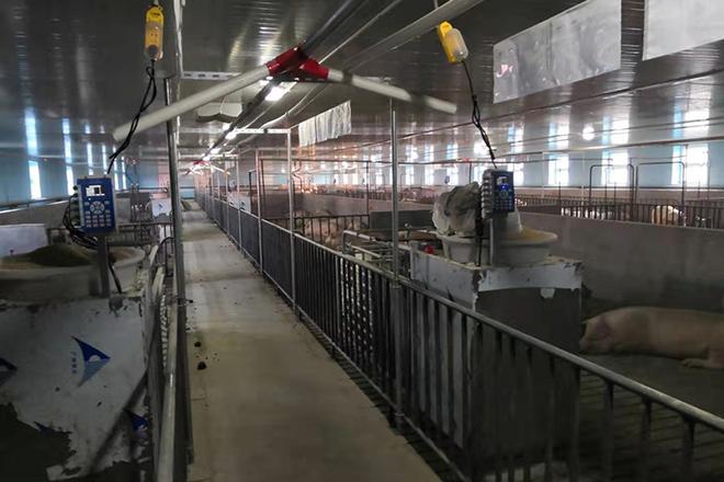 黑龙江15000头经产母猪猪场智能饲喂站安装成功案例