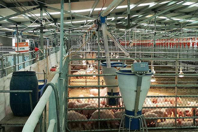 河南整厂智能化无人饲喂养猪设备工程安装成功案例