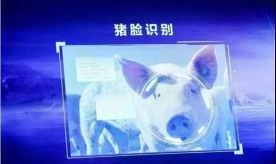 干货来啦!信息技术与AI智能养猪