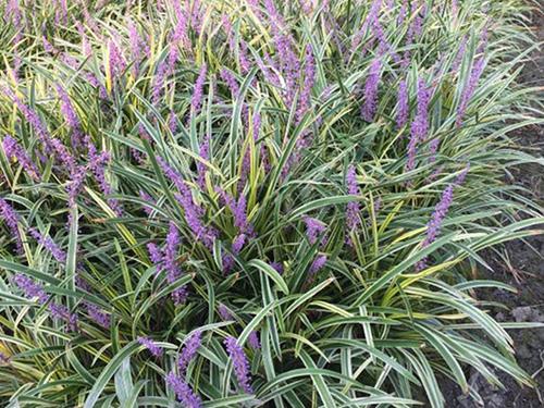 浅析花卉苗木如何运用在园林景观中?