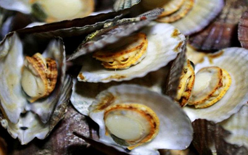 吃海鲜时需要注意什么——哈仙岛兴旺渔家