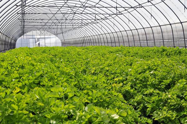 浅谈四川智慧农业对传统农业的改变