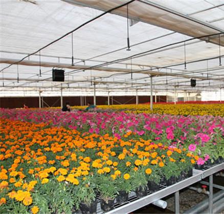 河南温室苗床系统服务案例