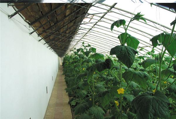 河南温室蔬菜大棚