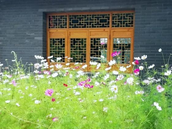 兰州花卉观赏_摄影—树屏小镇