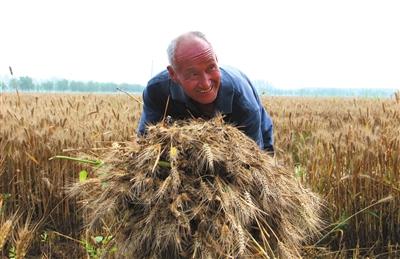 应对高温少雨省政府办公厅下发紧急通知种足种好秋作物