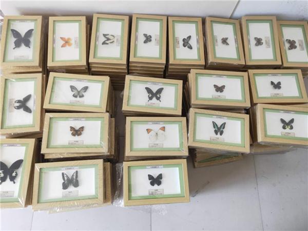 黑龍江蝴蝶標本