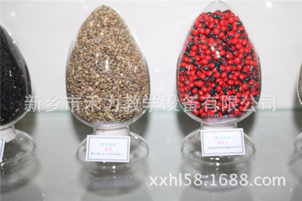 種子標本價格
