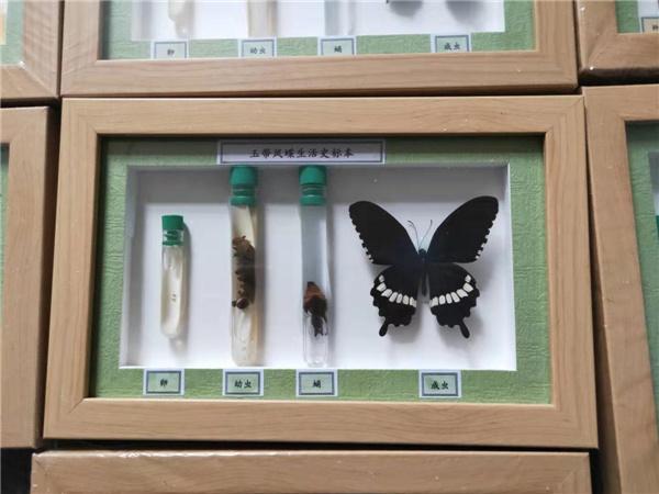 蝴蝶標本廠家