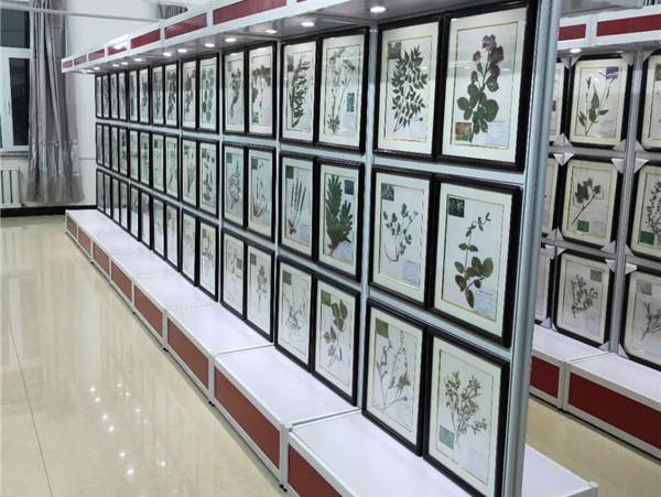 植物標本案例:樺南縣職教中心