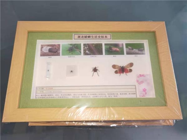 吉林昆蟲標本價格