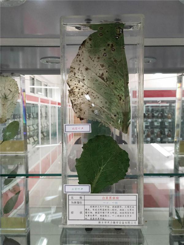 吉林植物病害浸制標本制作