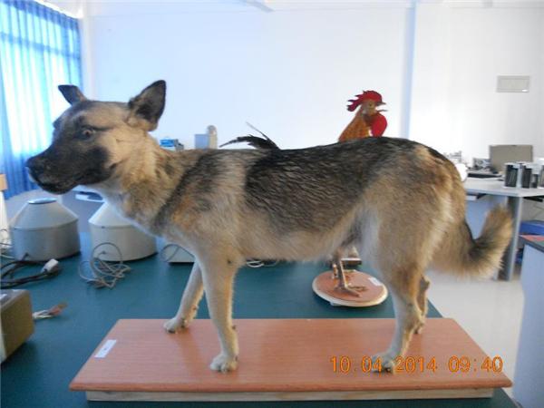 動物剝制標本