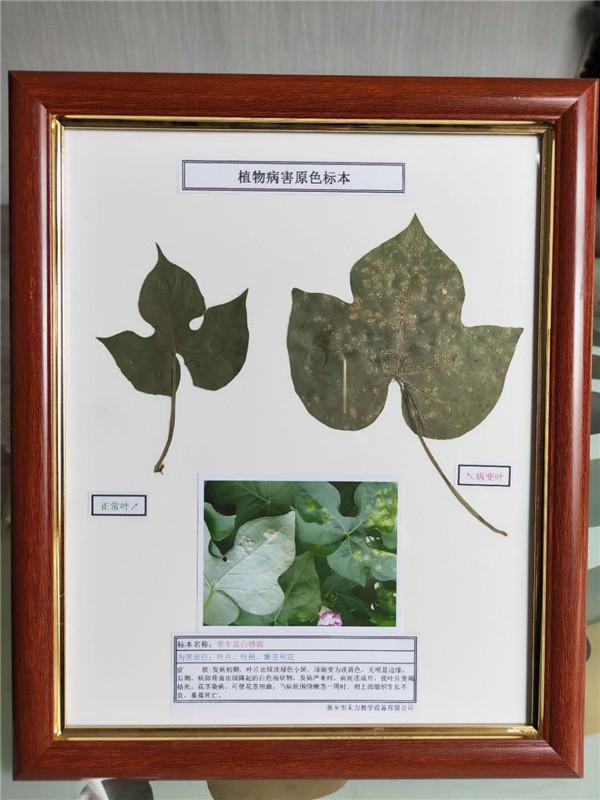 植物病害原色標本定制