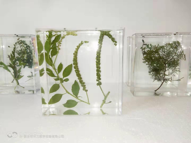 黑龍江植物標本制作方法的小知識,拿小本本記下來哦