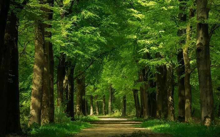 7月1日起實施新修訂的《中華人民共和國森林法》