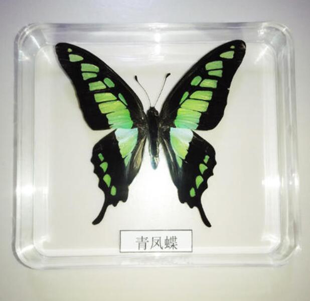 黑龍江昆蟲標本