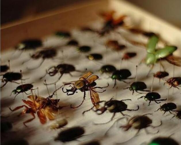 昆蟲標本廠家