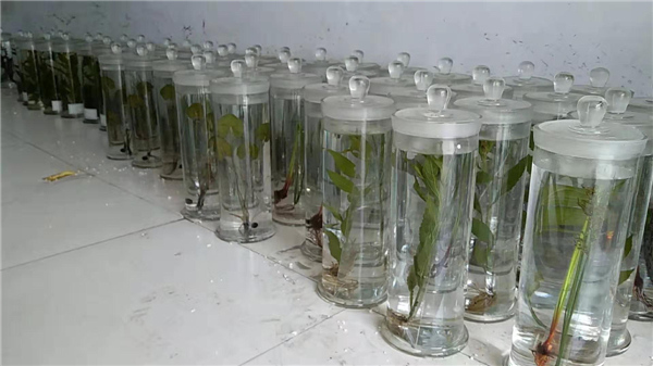 對于植物標本的采集有什么是需要我們注意的