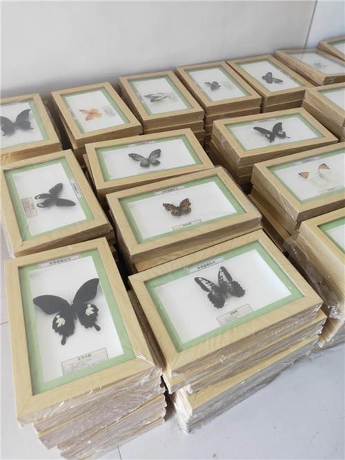黑龍江蝴蝶標本制作價格