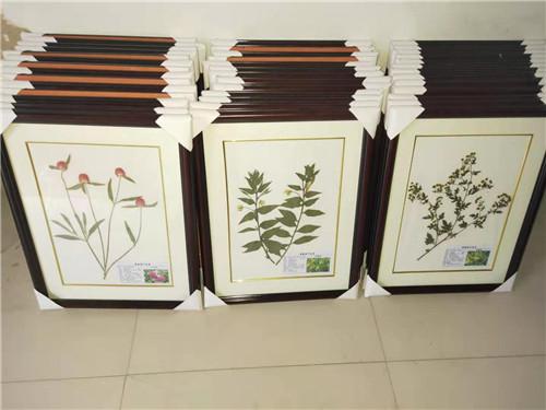 黑龍江植物臘葉標本廠家