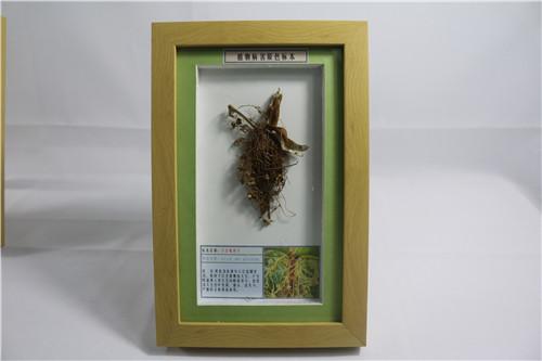 黑龍江植物病害原色標本