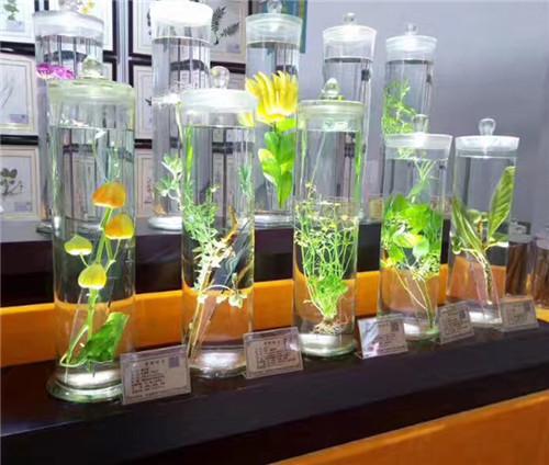 黑龍江植物保色浸制標本