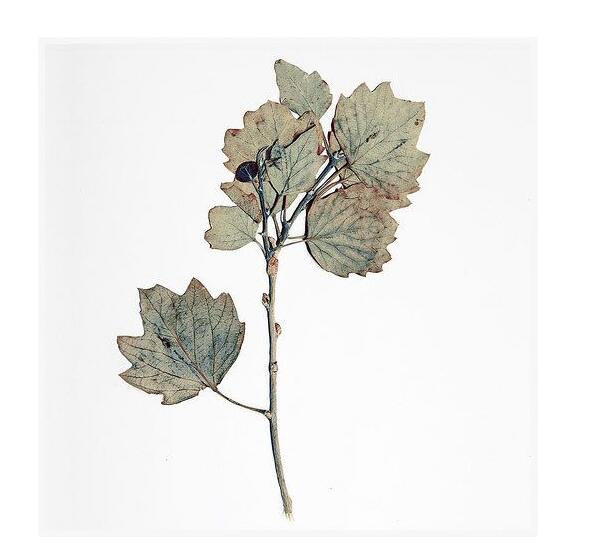 你知道制作植物標本的過程是什么嗎
