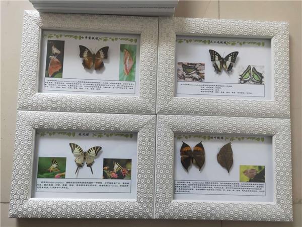 蝴蝶標本有什么觀賞的意義?
