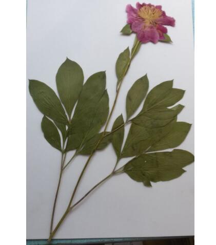 植物標本在制作的時候需要注意哪些問題?