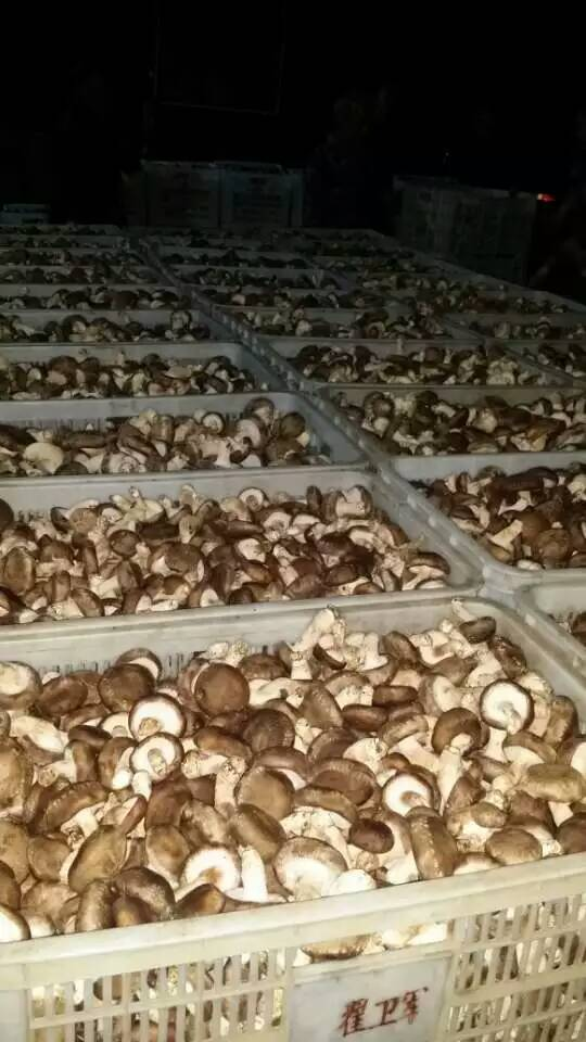 香菇储藏库