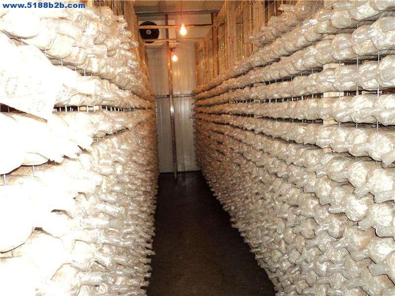 菌类生产冷库