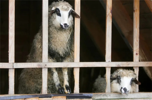 航拍苏伊士运河堵船震撼画面 数千牛羊也遭殃谁来负责