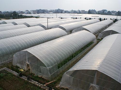 米易县蔬菜温室大棚定制安装成功案例