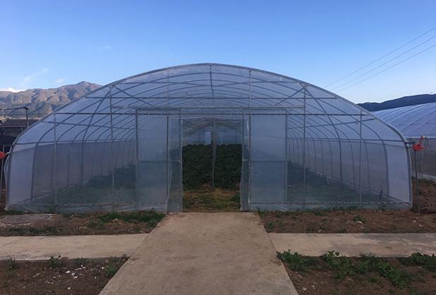 怎么使用四川蔬菜温室大棚能够提高利润?